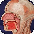 Cancer-lip and oral cavity